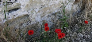 The red poppies of Gallipoli. Constant reminders of the before.