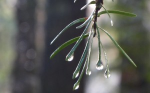 Rain, January 2018